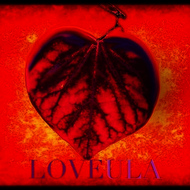 Love - Loveula